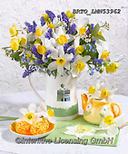 Alfredo, FLOWERS, BLUMEN, FLORES, photos+++++,BRTOLMN53962,#f#, EVERYDAY