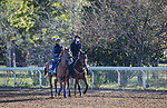 Red King, trained by Philip D'Amato, exercises in preparation for the Breeders' Cup Turf at Keeneland 11.03.20.