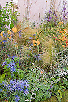 Achillea terracotta orange color yarrow, ornamental grass, Nepeta catmint, Helichrysum licorice plant, blue spiky Eryngium seaholly in mixed garden design border in orange and blue color theme against wall. Lots of textures and mixture of shapes