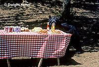 MA01-134z  Black Bear - at picnic site - Ursus americanus