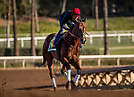 ARCADIA, CA - APRIL 21: Bolt d'Oro gallops in preparation for the Kentucky Derby at Santa Anita Park on April 21, 2018 in Arcadia, California. (Photo by Alex Evers/Eclipse Sportswire/Getty Images)