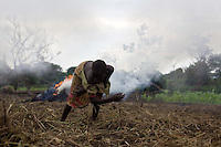 Refugees clearing a field for cultivation. In June the rains began and refugees rushed to cultivate the  open land in their camp.