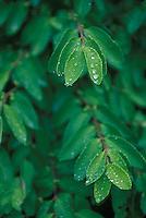 Rain drops on leaves<br />