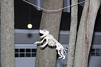 Life-sized skeletons are dressed up for Halloween decorations along Hillcrest Road in Belmont, Massachusetts, USA, on Mon., Oct. 30, 2017. A resident said the neighborhood has been doing similar coordinated decorations along the road for the previous 3 or 4 years. In this image, a skeleton dog is jumping toward a tennis ball.