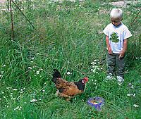 Kind, kleiner Junge füttert Huhn auf einem Bio-Bauernhof