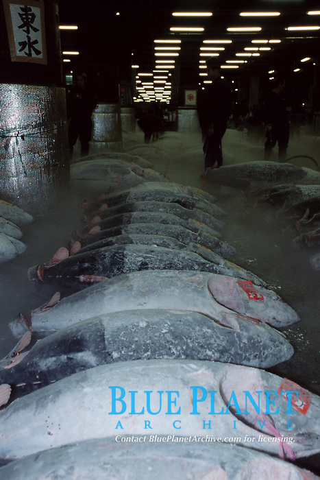 Bluefin tuna for sale at the Tsufiji fish market, which is the world's largest fish market, Japan