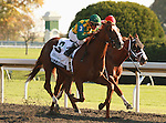 08 October 2011.  Dullahan and Kent Desormeaux win the Dixiana Breederss Futurity at Keeneland racecourse.   Owned by Donegal Racing, Jerry Crawford, and trained by Dale Romans.