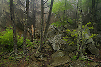 Spring forest and canyon walls