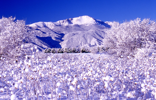 Pikes Peak and fresh snow on bushes and weeds, Colorado Springs, Colorado