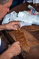Cuba, Pinar del Rio Region, Viñales (Vinales) Area.  A torcedor (cigar roller) at work.