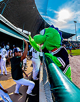 29 July 2018: The Vermont Lake Monsters Mascot Champ interacts with players at the dugout prior to a game against the Batavia Muckdogs at Centennial Field in Burlington, Vermont. The Lake Monsters defeated the Muckdogs 4-1 in NY Penn League action. Mandatory Credit: Ed Wolfstein Photo *** RAW (NEF) Image File Available ***