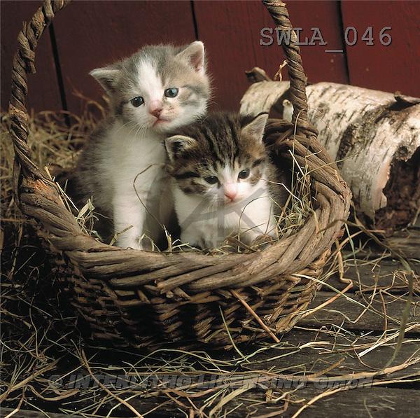 Carl, ANIMALS, photos(SWLA046,#A#) Katzen, gatos