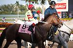 Hooh Why with jockey John Velazquez on post parade before winning the Florida Sunshine Millions Fillies and Mares Turf at Gulfstream Park. Hallandale Beach, Florida. 01-28-2012