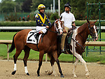June 22, 2019 : Covfefe (Shaun Bridgmohan) in the post parade of the Roxelana Stakes, Churchill Downs, Louisville, Kentucky. Trainer Brad H. Cox, Owners LNJ Foxwoods (Larry, Nancy, and Jaime Roth). By Into Mischief x Antics (Unbridled)  Mary M. Meek/ESW/CSM