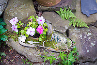 Impatiens flowers planted in shoe container, cute sneaker planter