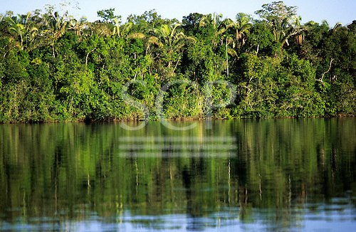 Amazon, Brazil. Thick, dense forested river bank vegetation.