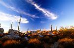Blue sky over cacti, Catalina, Baja California Norte, Mexico