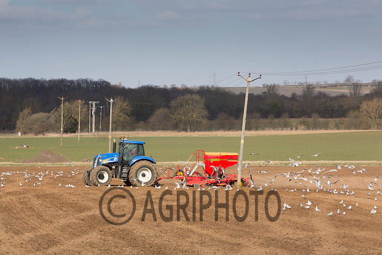 Drilling Spring Beans round a telegraph pole<br /> Picture Tim Scrivener 07850 303986