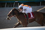 January 16, 2016: Mom'z Laugh (#1) with Javier Castellano up,  keeps her nose in front of You Bought Her to get the win in the Sunshine Millions Distaff at Gulfstream Park, Hallandale Beach (FL). Arron Haggart/ESW/CSM