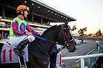 Sheikinator ridden by Robbie Albarado wins the Cash Call Futurity on December 14, 2013 at Betfair Hollywood Park in Inglewood, California .(Alex Evers/ Eclipse Sportswire)