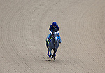 APRIL 30, 2015: El Kabeir, trained by John Terranova II, exercises in preparation for the 141st Kentucky Oaks during morning workouts at Churchill Downs in Louisville, Kentucky. Ting Shen/ESW/Cal Sport Media