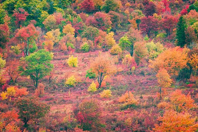 Autumn colors at Graveyard Fields
