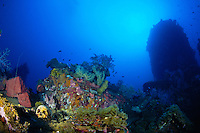 Human Skulls on the WW2 wreck of Aikoku Maru, Chuuk (Truk) Lagoon, Micronesia