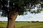 Europa, DEU, Deutschland, Hessen, Rhoen, Hessische Rhoen, Dietershausen, Typische Landschaft, Baum, Eiche, Eichenbaum, Kategorien und Themen, Natur, Umwelt, Landschaft, Landschaftsfotos, Landschaftsfotografie, Landschaftsfoto, Tourismus, Touristik, Touristisch, Touristisches, Urlaub, Reisen, Reisen, Ferien, Urlaubsreise, Freizeit, Reise, Reiseziele, Ferienziele<br /> <br /> [Fuer die Nutzung gelten die jeweils gueltigen Allgemeinen Liefer-und Geschaeftsbedingungen. Nutzung nur gegen Verwendungsmeldung und Nachweis. Download der AGB unter http://www.image-box.com oder werden auf Anfrage zugesendet. Freigabe ist vorher erforderlich. Jede Nutzung des Fotos ist honorarpflichtig gemaess derzeit gueltiger MFM Liste - Kontakt, Uwe Schmid-Fotografie, Duisburg, Tel. (+49).2065.677997, ..archiv@image-box.com, www.image-box.com]