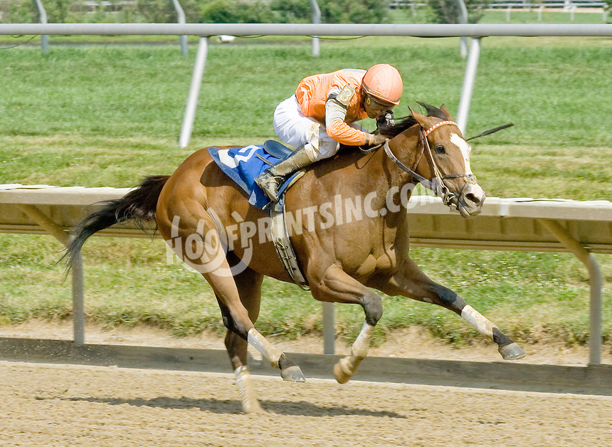 Class E Holiday winning at Delaware Park on 7/4/11