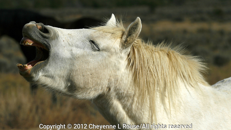 Rescued mustang on the Monero Mustang Sanctuary in Tierra Amarillas New Mexico - they roam free on 5,000 acres.