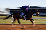 November 4, 2020: Raging Bull, trained by trainer Chad C. Brown, exercises in preparation for the Breeders' Cup Mile at Keeneland Racetrack in Lexington, Kentucky on November 4, 2020. Gabriella Audi/Eclipse Sportswire/Breeder's Cup/CSM