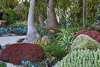 Undersea Garden with succulents by Jeff Moore at San Diego Botanic Garden