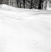 Animal tracks through snow&#xA;&#xA;<br />