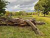 Log on Hampstead Heath, N London.<br /> <br /> Stock Photo by Paddy Bergin