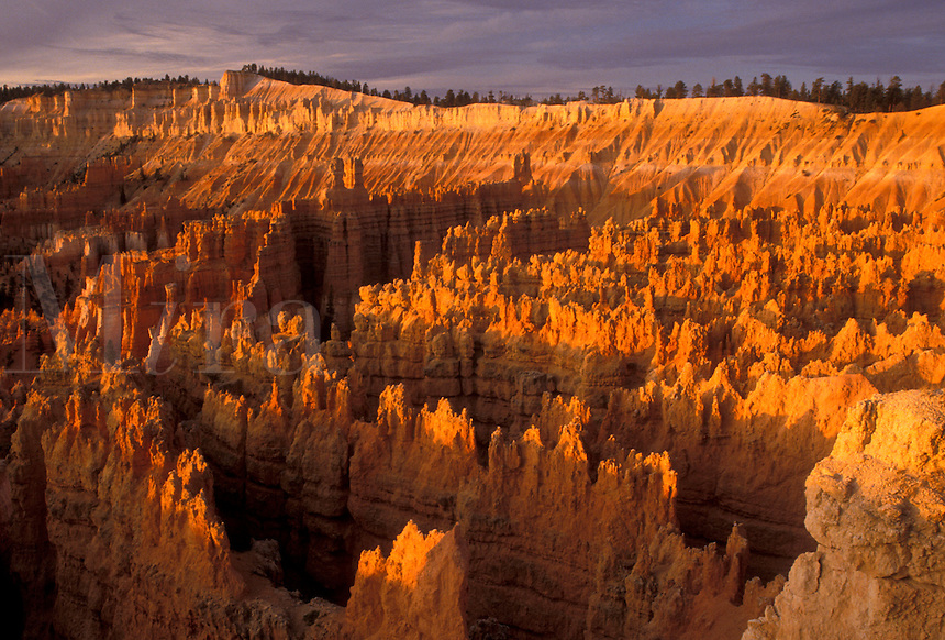 "AJ3837, Bryce Canyon, Bryce Canyon National Park, Paunsaugunt Plateau, Utah, Early morning light creates a spectacular view of jagged colorful rock formations and pillars called """"hoodoos"""" in the canyon of Bryce Canyon Nat'l Park in the state of Utah."