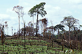 Acre State, Amazon, Brazil; following slash and burn deforestation with charred tree stumps.