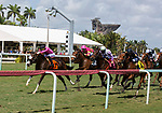 March 27: 202: I Get It (MD) #7, ridden by jockey Jose Ortiz, wins the Sanibel Island Stakes on Florida Derby Day at Gulfstream Park in Hallandale Beach, Florida. Liz Lamont/Eclipse Sportswire/CSM