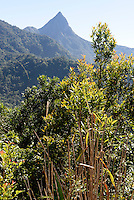 Jianfeng Ling-Berge bei Sanya auf der Insel Hainan, China<br /> Jianfeng Ling mountains near   Sanya,  Hainan island, China