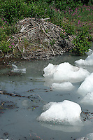 A beaver lodge can be found alongside icebergs in Spencer Lake. The Alaska Railroad's Spencer Glacier Whistlestop train gives visitors access to hiking, camping and stunning views.