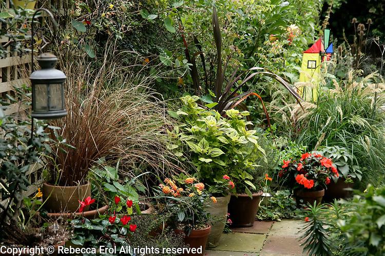 Patio garden in the autumn, London, UK: Carex buchananii, Phormium purpureum, Stipa calamagrostis, Coleus 'Gays Delight' provide the foliage and cyclamen, lantanas and an impatiens the colour