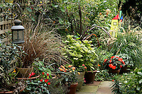 Patio garden in the autumn, London, UK: Carex buchananii, Phormium purpureum, Stipa calamagrostis, Coleus 'Gays Delight' provide the foliage and cyclamen, lantanas and an impatiens the colour