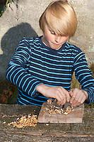 Kind, Junge macht Pesto aus Walnüssen, Sonnenblumenkernen, Olivenöl und Parmesankäse selbst, Walnüsse werden mit dem Wiegemesser zerkleinert, Walnuss, Walnuß, Wal-Nuss, Wal-Nuß, Nüsse, Ernte, Juglans regia, Walnut, Noyer commun, Sonnenblumen, Helianthus, Sunflower