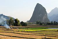 LAOS Vang Vieng , Reisfelder vor Kalkstein Bergkulisse , Frauen pflanzen Reissetzlinge um | .LAOS Vang Vieng, paddy fields infront of limestone mountains , women replant rice plants