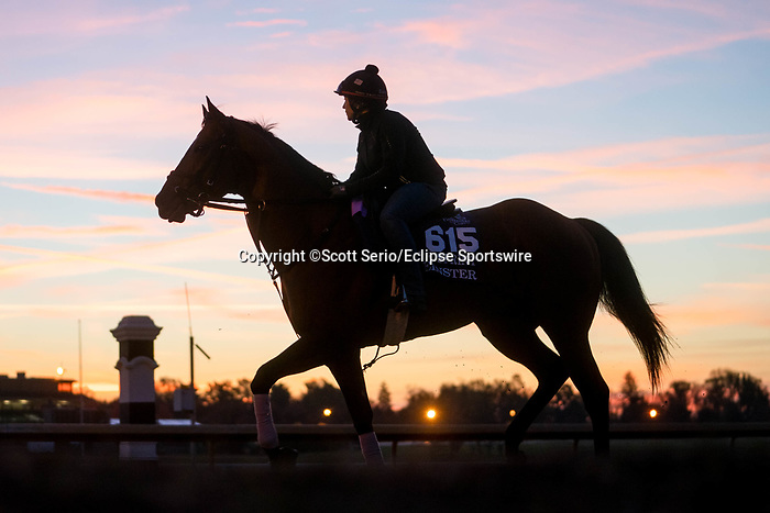 November 5, 2020: Leinster, trained by trainer George R. Arnold II, exercises in preparation for the Breeders' Cup Turf Sprint at Keeneland Racetrack in Lexington, Kentucky on November 5, 2020. Scott Serio/Eclipse Sportswire/Breeders Cup/CSM