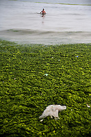 A man stands waist deep beyond algae-covered water off the Number 6 Bathing Beach on Qingdao Bay in Qingdao, Shandong, China.  ..Qingdao is the host of the sailing events for the 2008 Summer Olympics. Algae blooms like this have become common in inland lakes in China, often caused by high pollution in bodies of water.  The city is asking for help and forcing residents to take part in the cleanup effort before the Olympic events..