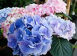 Flower, Smith & Hawkins, San Francisco, California
