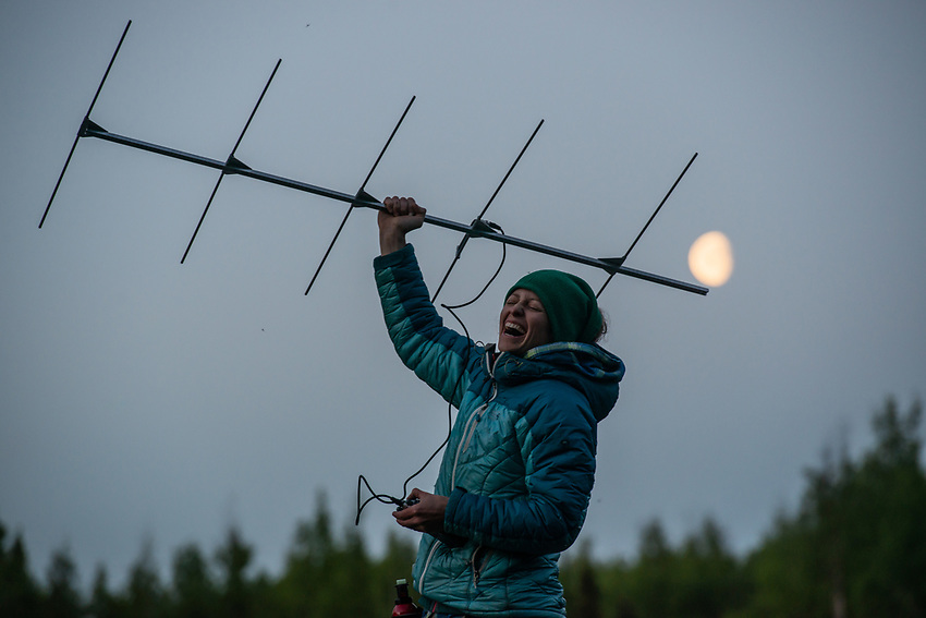 Jesika Reimer, Assistant Zoologist at UAA's Alaska Center for Conservation Science (ACCS), tracking radio tagged Little Brown Bat (Myotis lucifugus) to their roosts at dawn on Joint Base Elmendorf-Richardson (JBER) near Anchorage, Alaska. Researchers from ACCS and the Applied Environmental Research Center are working with DOD wildlife managers to determine where JBER bats roost and assess their potential vulnerability to white-nose syndrome. Photo by James R. Evans