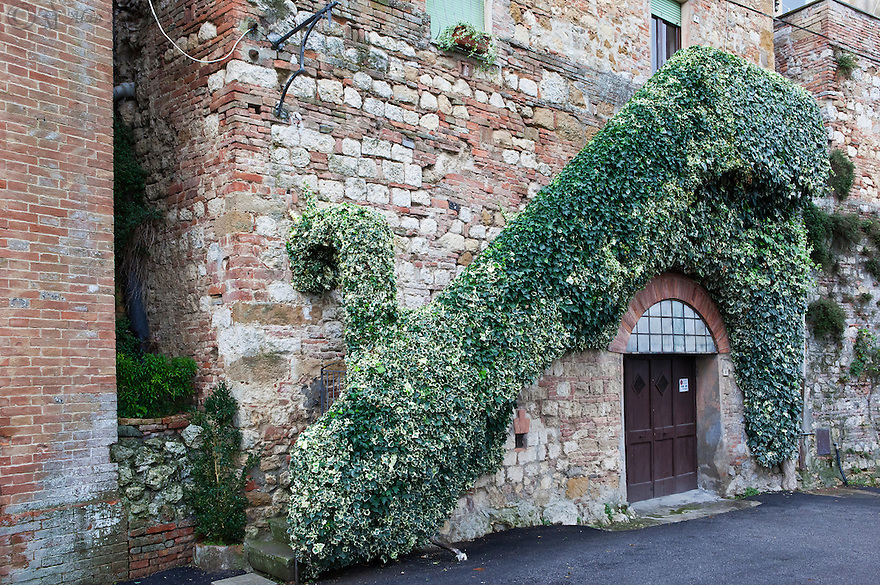 """""""Ivy on the Wall""""<br /> Montepulciano, Italy<br /> 2015<br /> <br /> Ivy grows along the stairway and over the arch creating a grand entrance."""