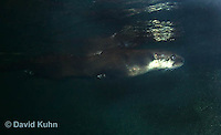 1208-1001  Northern River Otter Swimming Under Water, Lontra canadensis  © David Kuhn/Dwight Kuhn Photography