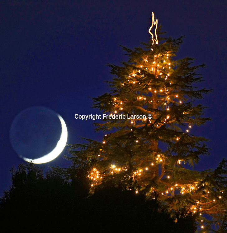 The crescent moon neighbors up to a Christmas tree seen on Christmas tree Hill in Corte Madera, California.